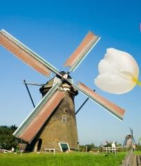 W Lbernholland in Wölbern Invest legt weiteren Holland-Immobilienfonds auf