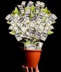 geldpflanze