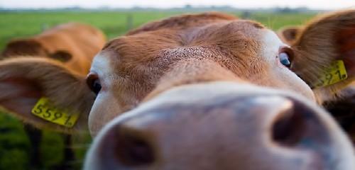 Shutterstock 16537071 in Ackergold: Mit Agrarinvestments punkten