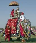elefant - 204