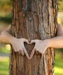 Baum-127x150 in Anlegerstudie: Nachhaltigkeit vor Rendite