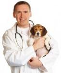 Tierarzt-127x150 in Helvetia führt Tierkrankenversicherung ein