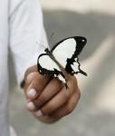 Butterfly-127x150 in Swisscanto unterzeichnet die UN-Grundsätze für verantwortungsbewusstes Investieren