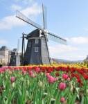 Holland-niederlande-tulpen-windm Hle-127x150 in Real I.S.: Zweiter Holland-Fonds startklar