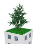 Dachfonds-dach-gr N-nachhaltikeit-baum-127x150 in SVF lanciert Nachhaltigkeits-Dachfonds
