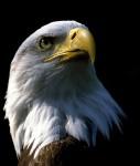 Eagle-shutterstock 110779-1-127x150 in DWS präsentiert US-Dividendenfonds