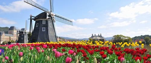 Teaser-Holland-M Hle-Tulpen in Holland-Immobilien: Auf die Auswahl kommt es an