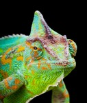 Chameleon-online-127x150 in Absolute Return mit Wandelanleihen