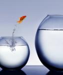 goldfisch sprung aufstieg
