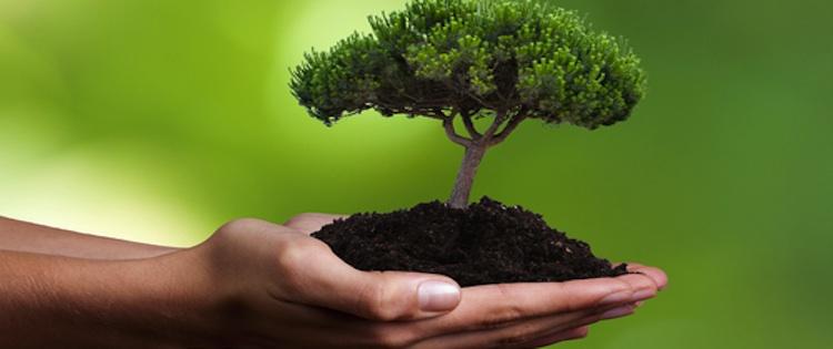 Nachhaltigkeit: Versicherer noch zu zaghaft