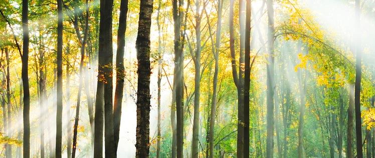 Waldfonds