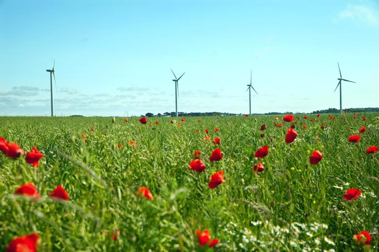 Shutterstock 183067829 in Leonidas setzt weiter auf französische Windparks