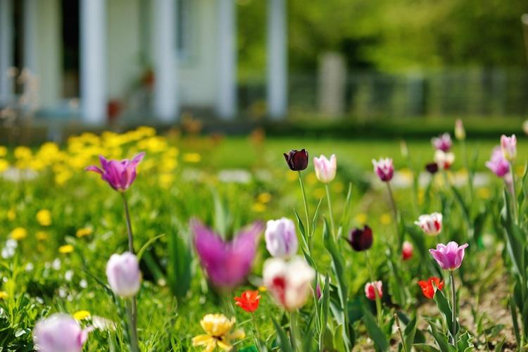 Fruehling Shutterstock 136384646-Kopie in Frühlingszeit ist Bauzeit