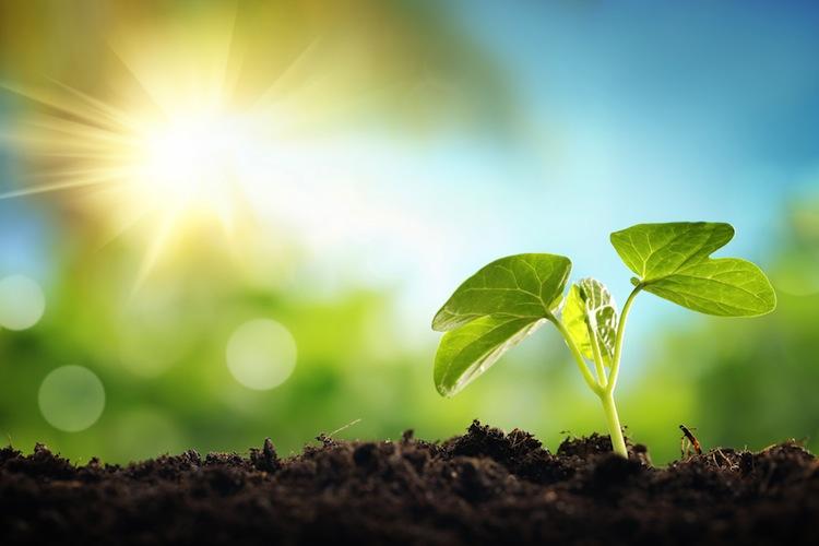 Shutterstock 247018750 in Die neue Welt wächst