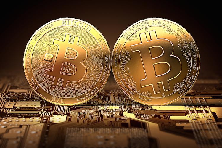 Bitcoin-bitcoin-cash-spaltung-fork-btc-bcc-shutterstock 688699402 in Riesige Vermögenslücke bei Bitcoin Cash