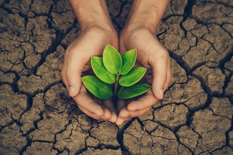 Shutterstock 555705742 in Nachholbedarf bei Nachhaltigkeitsstandards