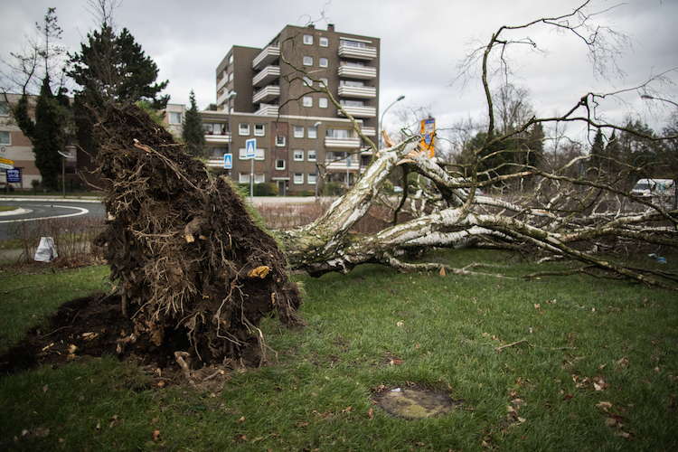 Friederike in Sturmtief Friederike: Woran Hausbesitzer und Mieter denken sollten