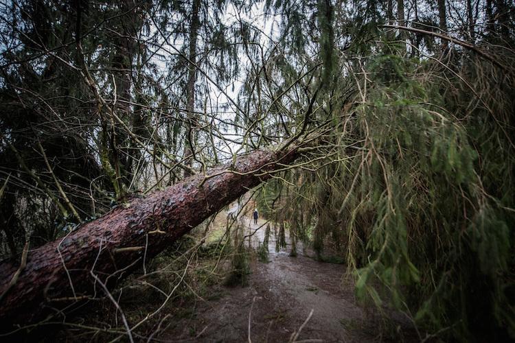 GDV: Eine Milliarde Euro Schaden durch Friederike