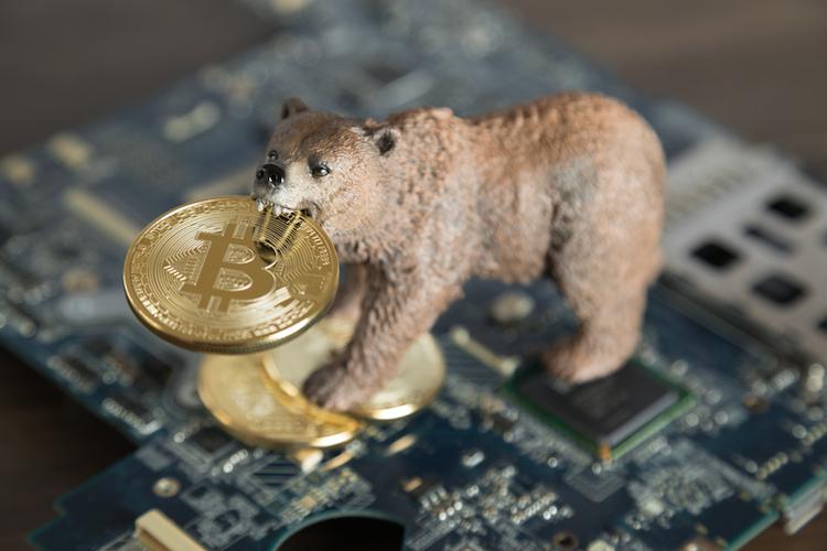 Baer-bitcoin-shutterstock 1063158278 in Wir stehen noch ganz am Anfang der Krypto-Reise