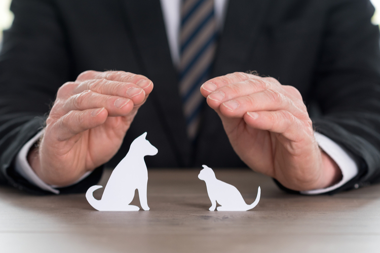 Rating: Die fairsten Tier-Haftpflicht-Versicherer 2018