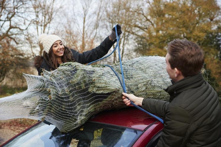 Shutterstock 607523735 Weihnachtsbaum in Alle Jahre wieder: No-Gos beim Weihnachtsbaumtransport