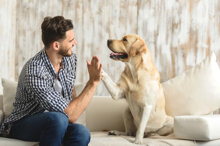 Hundehaftplicht: Die zehn beliebtesten Hunderassen 2018