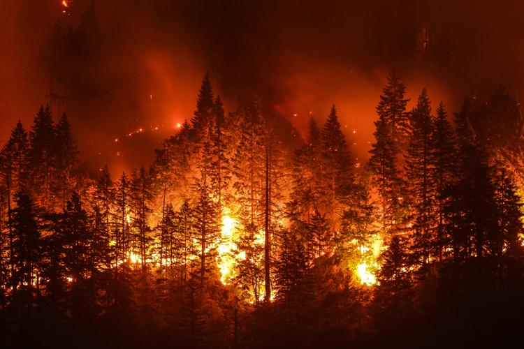 Munich Re: Versicherer stark von Waldbränden getroffen