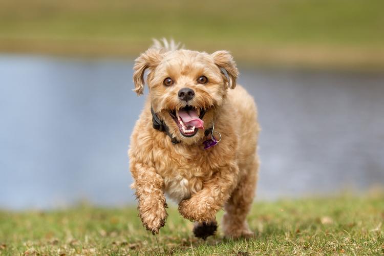 Urteil: Nicht angeleinte Hunde können für Halter teuer werden