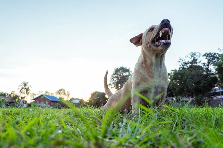 """Shutterstock 517172353 Hund in """"Der will doch nur spielen"""" - Haftpflichtversicherung für Haustiere"""