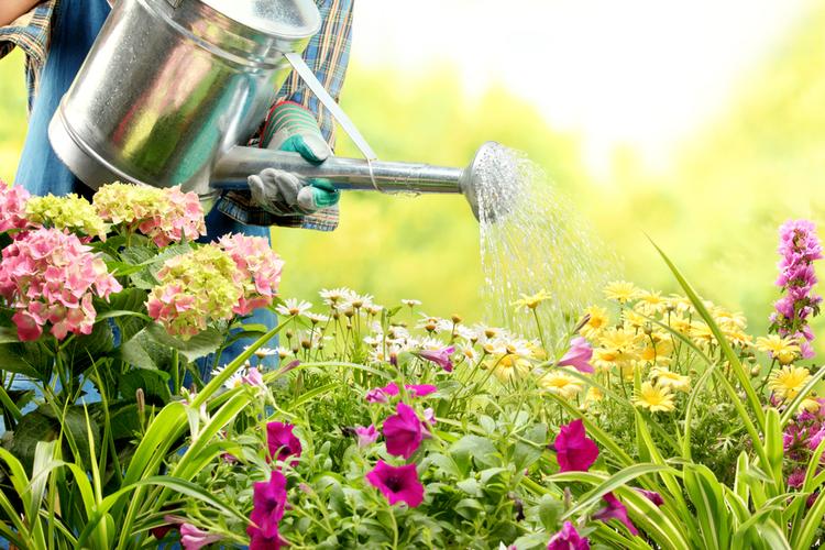 Die Versicherung als Gärtner: Mit Service ins Herz der Kunden