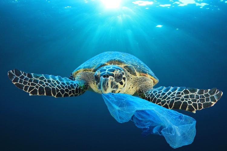 Shutterstock 1074166649 in Tag des Ozeans – kein Feiertag