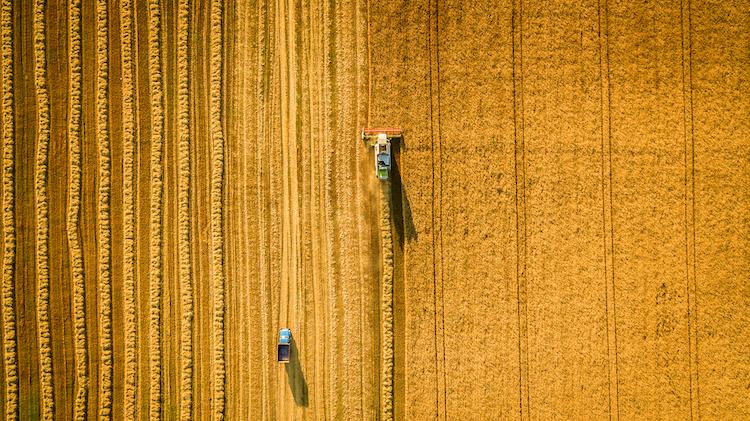 Shutterstock 473244196 in Strohtrocken: Getreidefelder gehen in Flammen auf