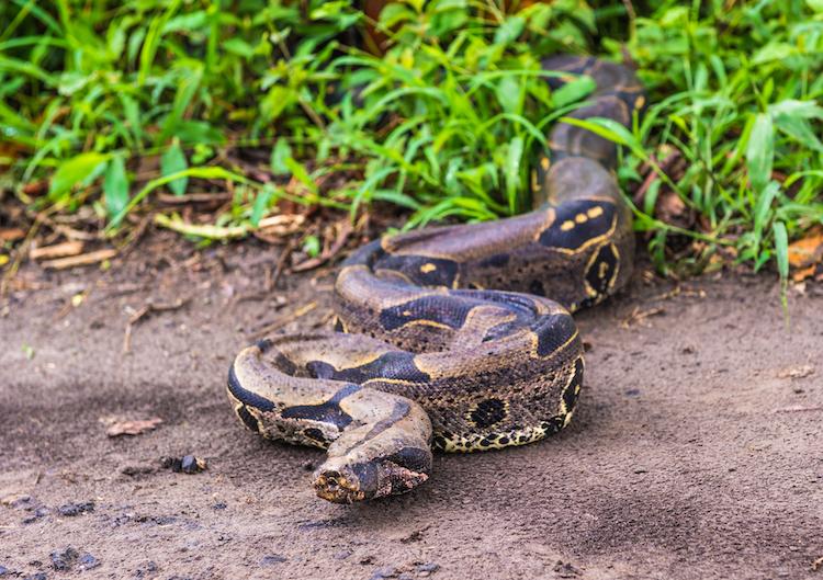 Shutterstock 131441984 in Wer zahlt, wenn eine Schlange entwischt?