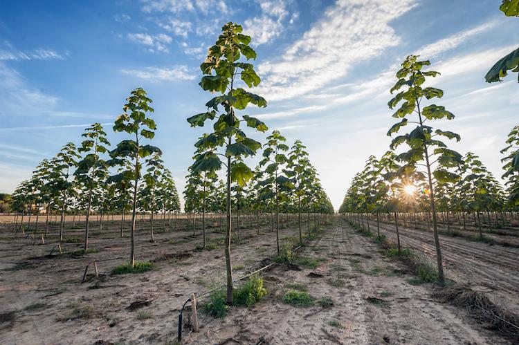 Shutterstock 494426782-1 in BaFin untersagt weiteres Baum-Direktinvestment