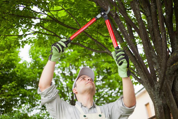 Shutterstock 221622679 in Unfallgefahr beim Baumschnitt: Welchen Versicherungsschutz es braucht