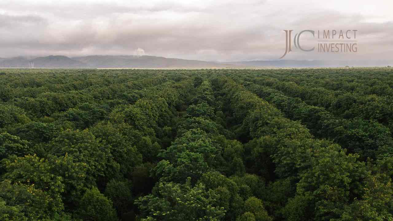 Riesige Waldfläche