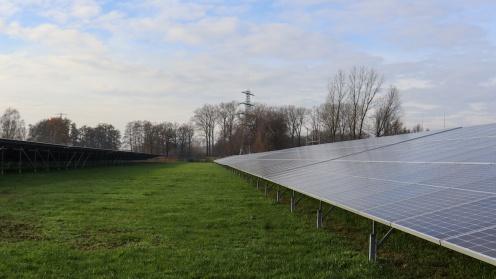 Die Solaranlagen von LHI stehen auf einer grünen Wiese
