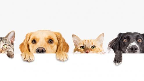 2 Katzen und 2 Hunde, die über eine Tia