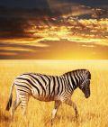 Saxo Bank nimmt Südafrika ins Visier