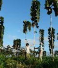 Bauminvest-Waldfonds mit zweitem Spross