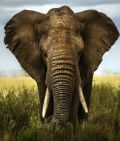 Robeco Afrikafonds für deutsche Anleger