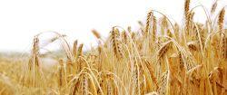 Agrarfonds: Spekulation auf den Hunger der Welt?
