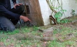Haftpflicht: Wenn Nachbars Pflanzen Schäden verursachen