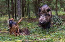 Gothaer bringt neue Jagdversicherung