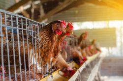 R+V: Schadenfälle wegen Vogelgrippe steigen rasant