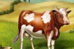 Rendite mit glücklichen Kühen in Neuseeland