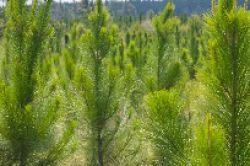 Jamestown buhlt mit zweitem USA-Waldfonds um die Anlegergunst