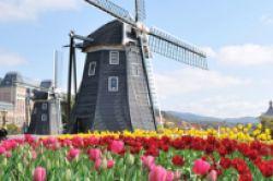 Niederlande: Investoreninteresse lässt Bürorenditen sinken