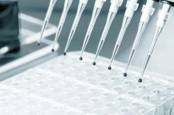 Biotechnologie: Bakterien produzieren Rendite