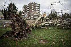 """Sturmtief """"Friederike"""": Woran Hausbesitzer und Mieter denken sollten"""